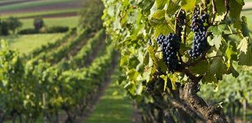 Wines by Region