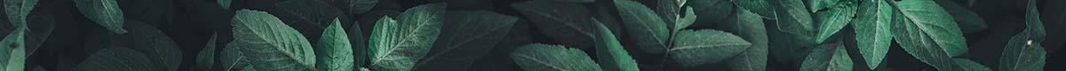 Organic / Biodynamic